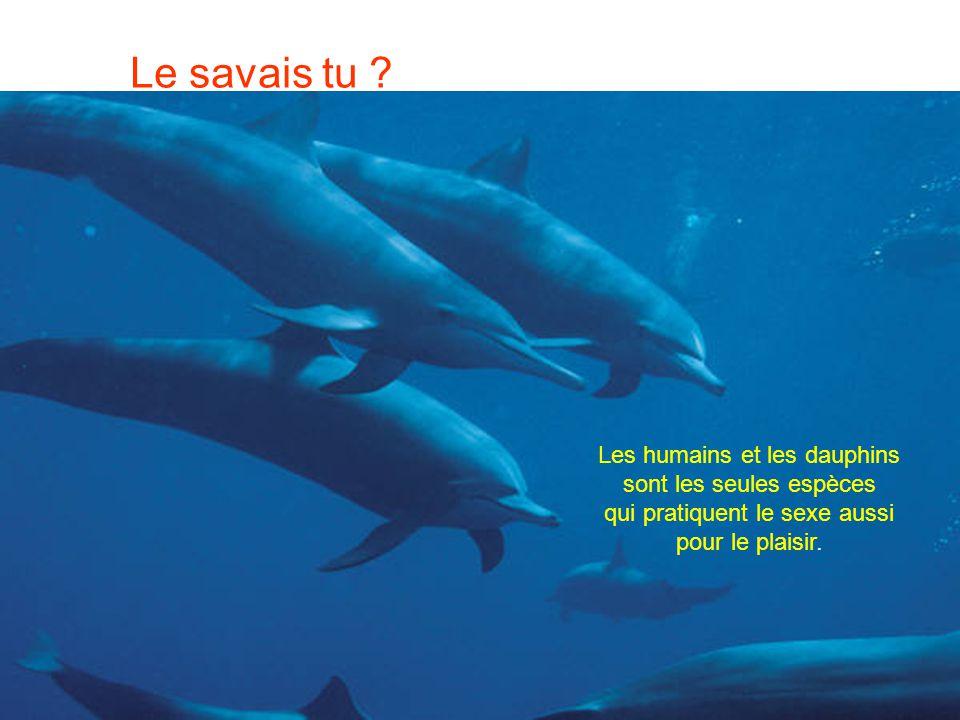 Le savais tu Les humains et les dauphins sont les seules espèces