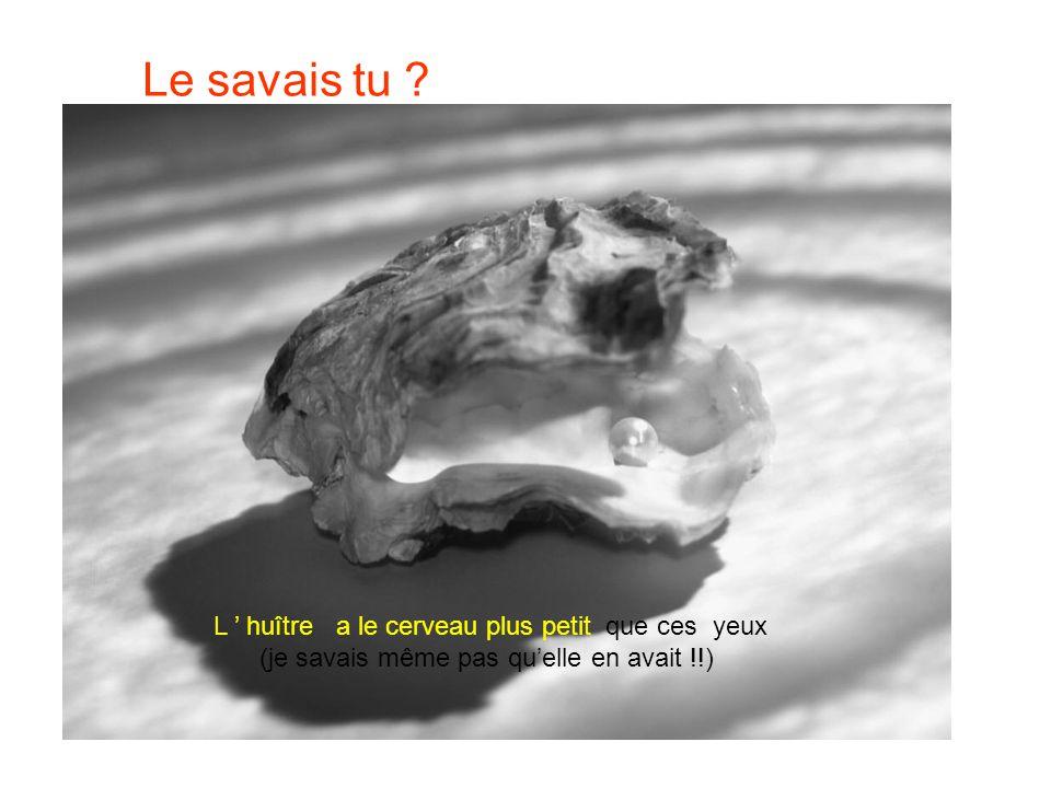 Le savais tu L ' huître a le cerveau plus petit que ces yeux