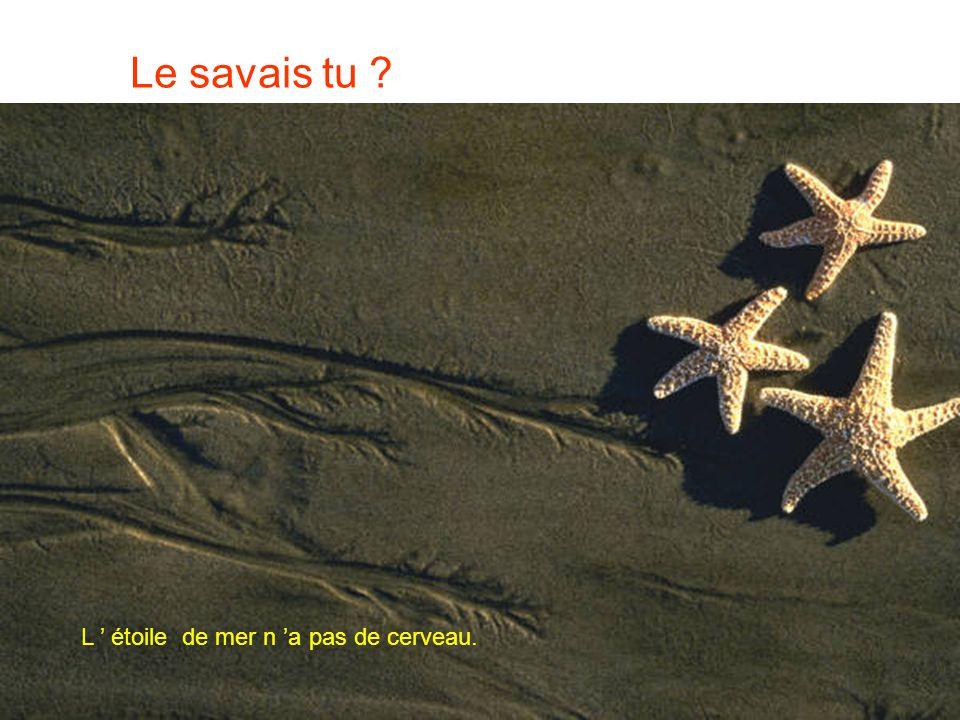 Le savais tu L ' étoile de mer n 'a pas de cerveau.