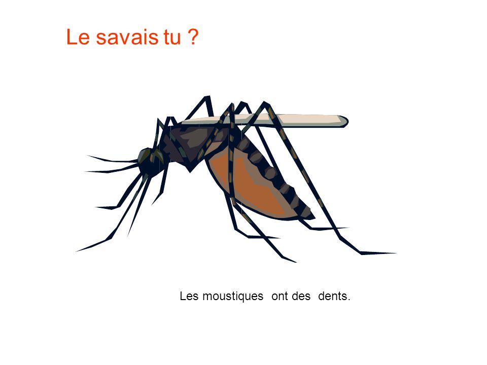 Le savais tu Les moustiques ont des dents.