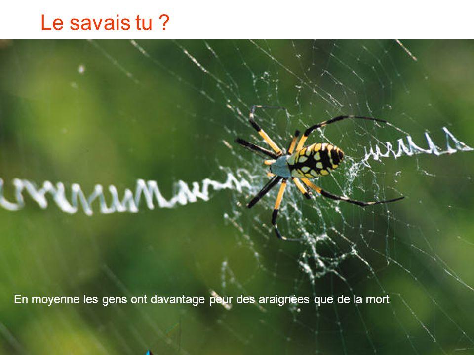 Le savais tu En moyenne les gens ont davantage peur des araignées que de la mort