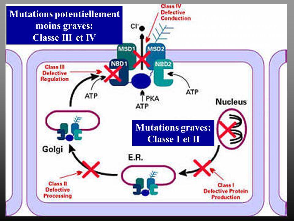 Mutations potentiellement moins graves: Classe III et IV