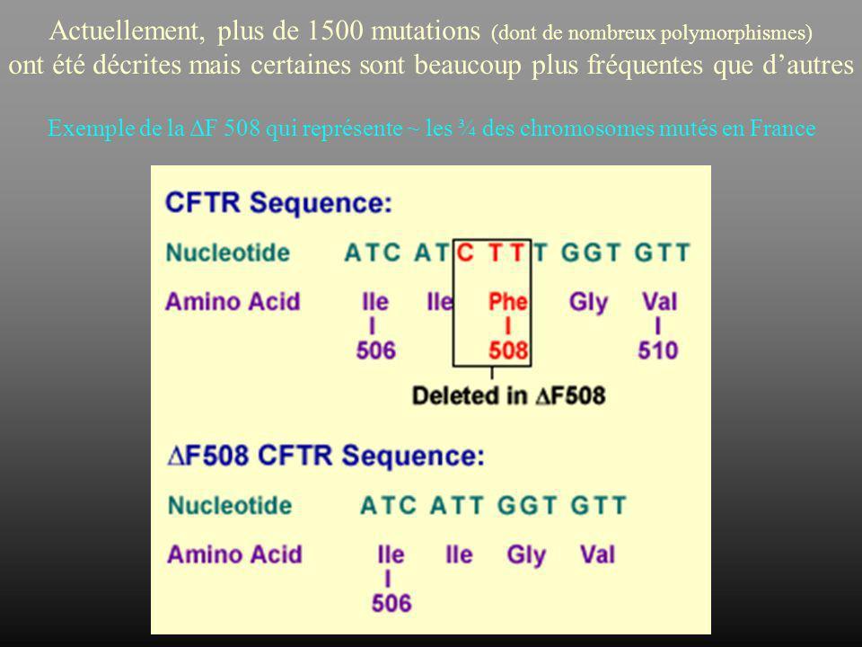 Actuellement, plus de 1500 mutations (dont de nombreux polymorphismes)