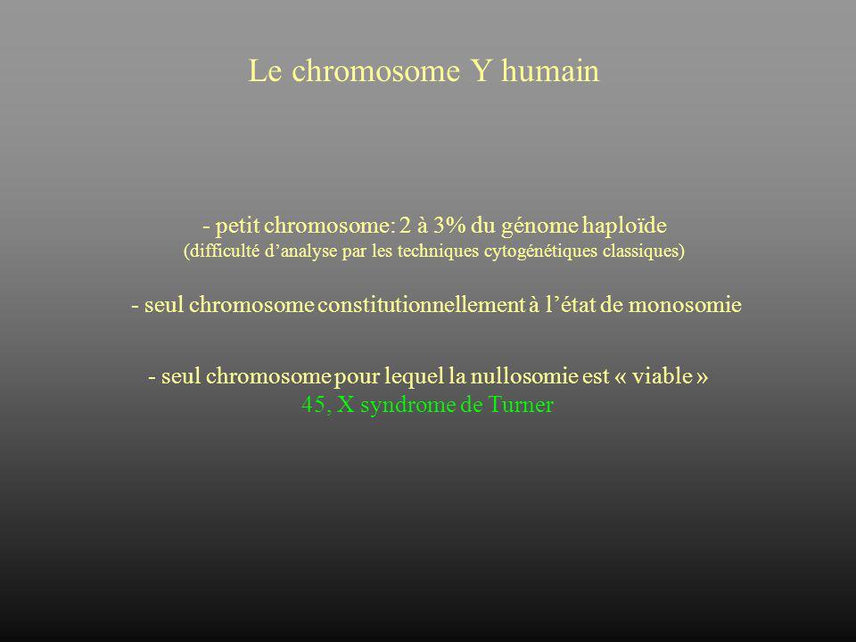 Le chromosome Y humain - petit chromosome: 2 à 3% du génome haploïde