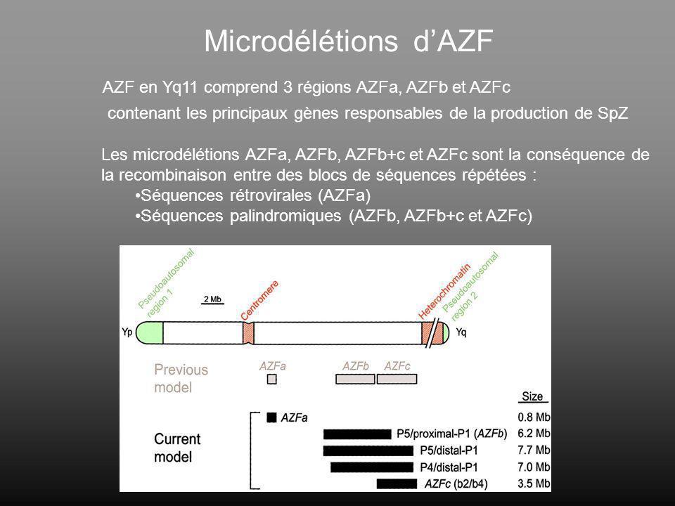 Microdélétions d'AZF AZF en Yq11 comprend 3 régions AZFa, AZFb et AZFc