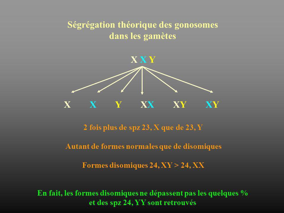 Ségrégation théorique des gonosomes dans les gamètes