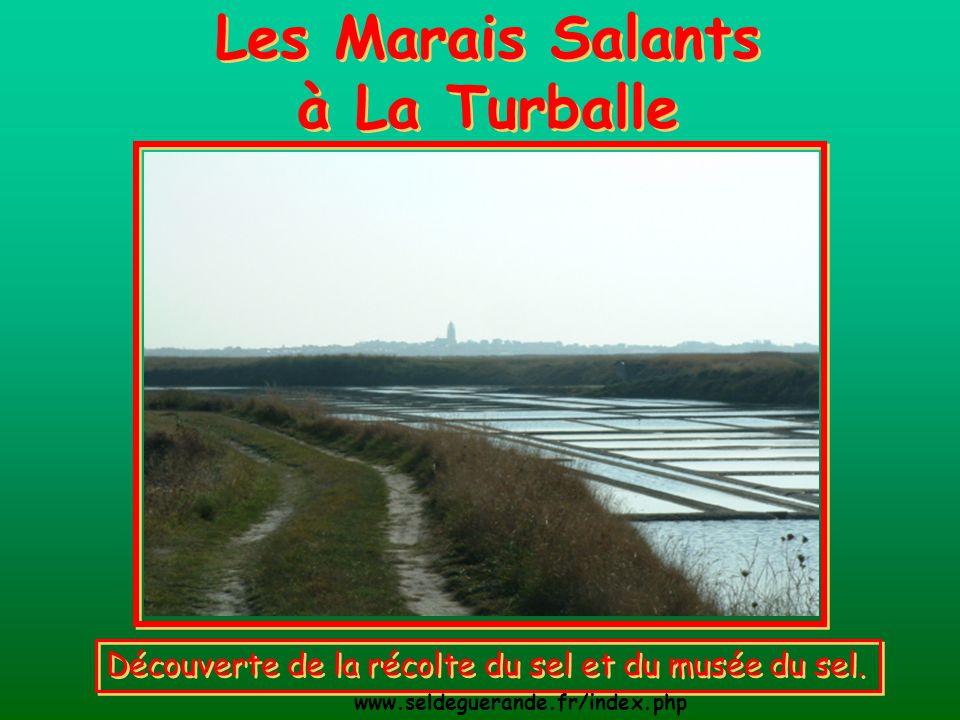 Les Marais Salants à La Turballe