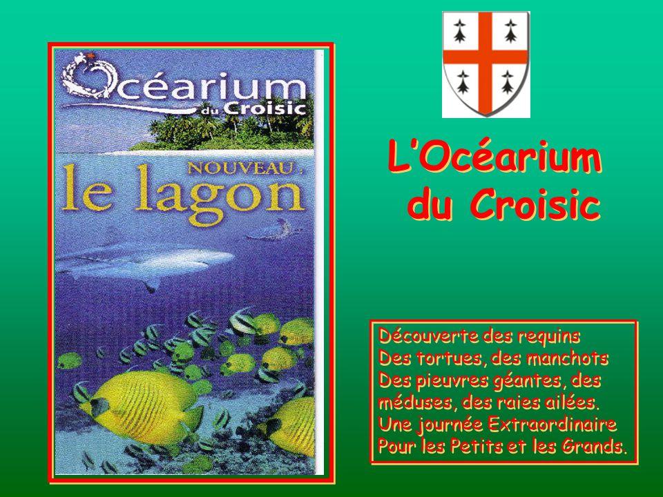 L'Océarium du Croisic Découverte des requins Des tortues, des manchots