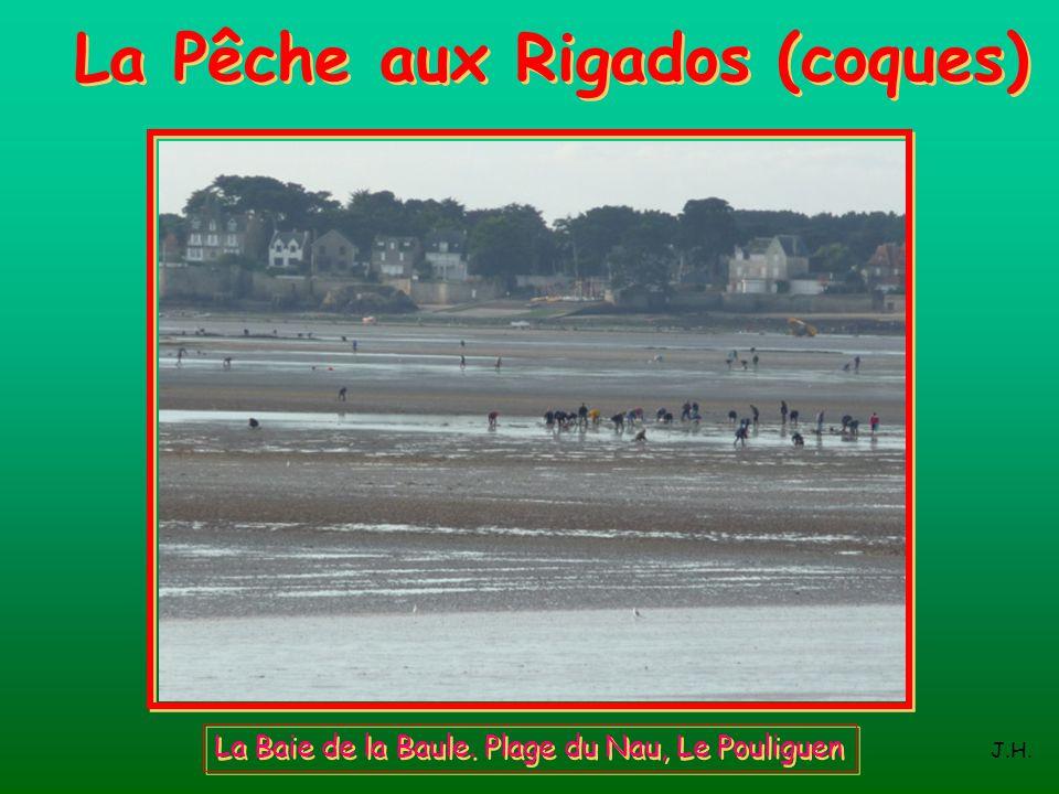 La Pêche aux Rigados (coques)
