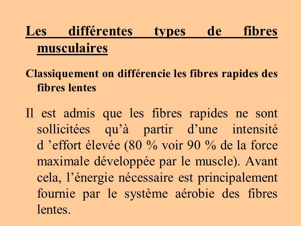 Les différentes types de fibres musculaires