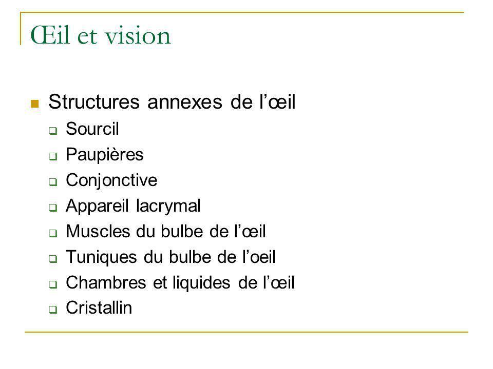Œil et vision Structures annexes de l'œil Sourcil Paupières