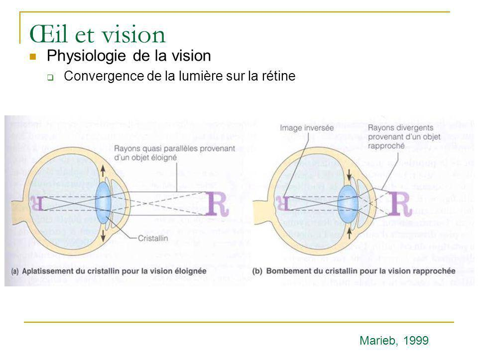 Œil et vision Physiologie de la vision