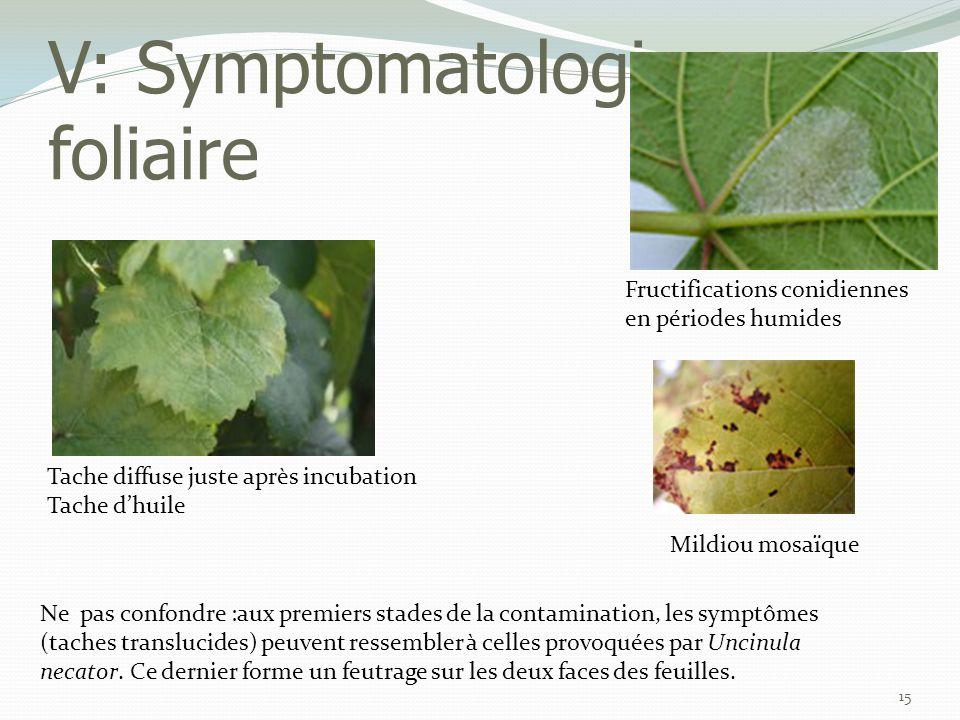 V: Symptomatologie - foliaire