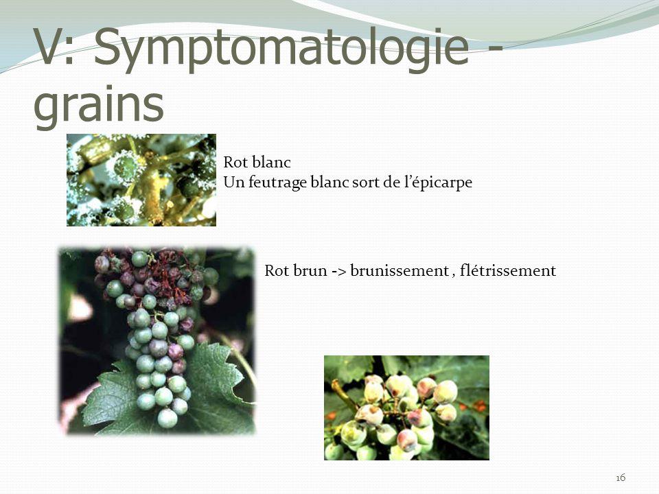 V: Symptomatologie - grains
