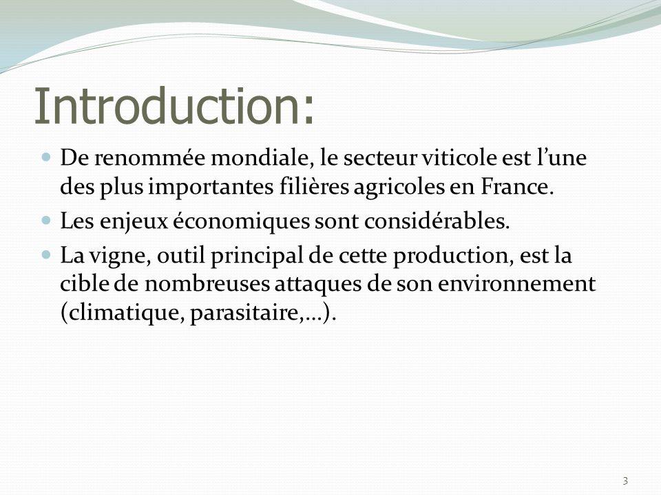 Introduction: De renommée mondiale, le secteur viticole est l'une des plus importantes filières agricoles en France.