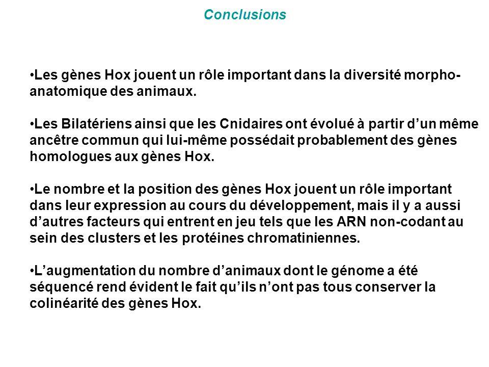 Conclusions Les gènes Hox jouent un rôle important dans la diversité morpho-anatomique des animaux.