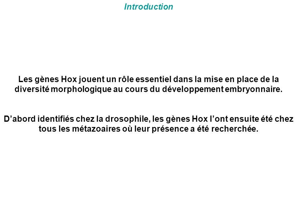 Introduction Les gènes Hox jouent un rôle essentiel dans la mise en place de la diversité morphologique au cours du développement embryonnaire.