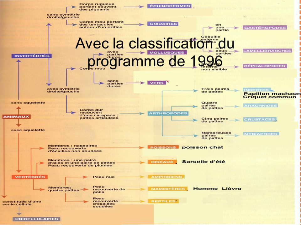 Avec la classification du programme de 1996