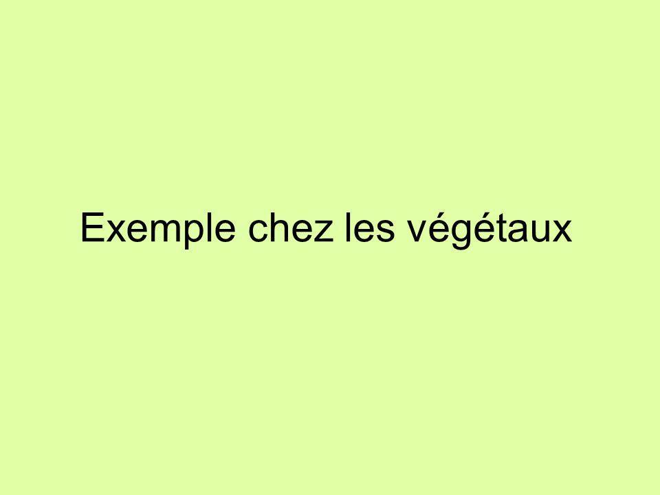 Exemple chez les végétaux