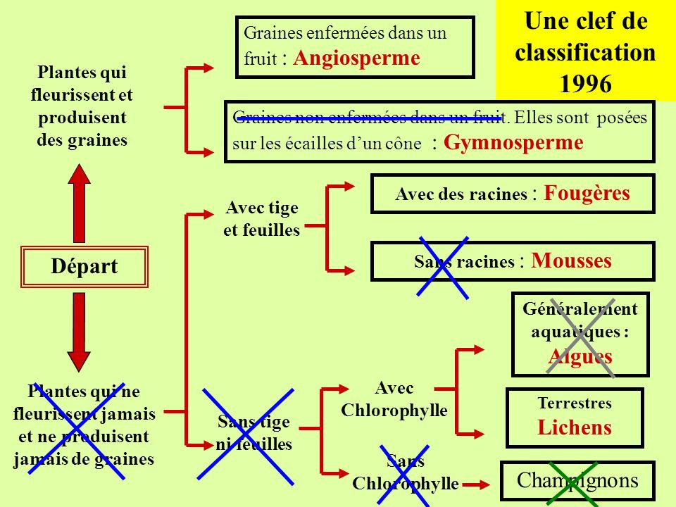 Une clef de classification 1996