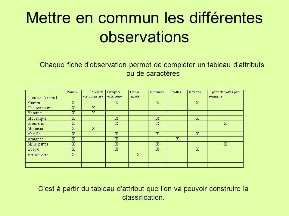 Mettre en commun les différentes observations