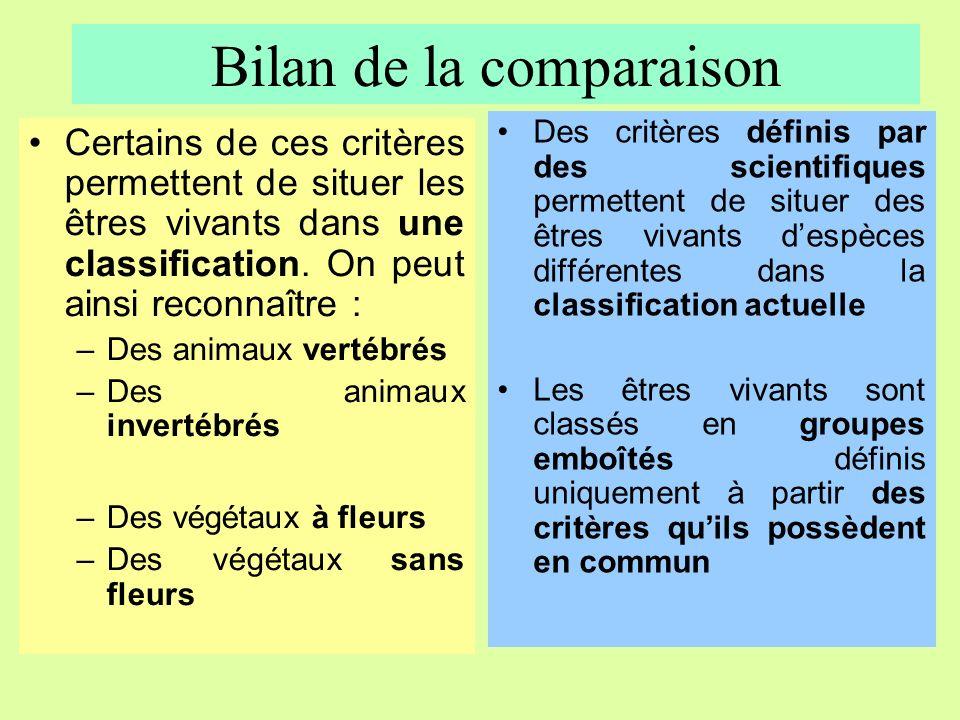 Bilan de la comparaison