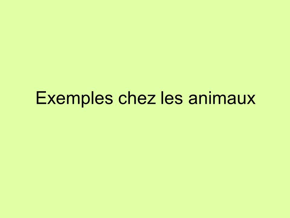 Exemples chez les animaux