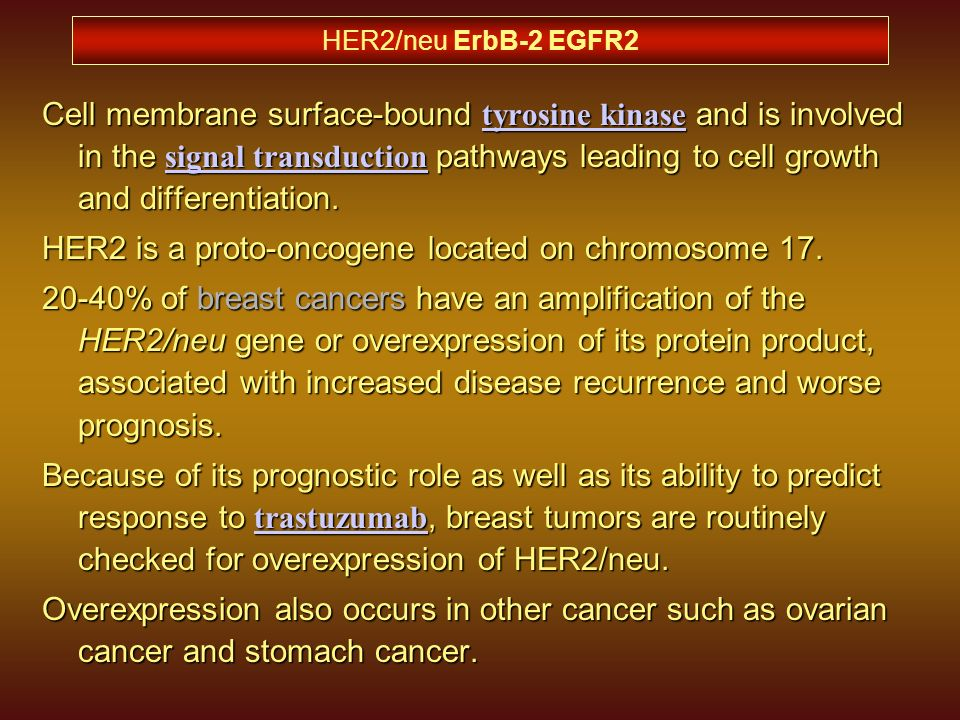 HER2 is a proto-oncogene located on chromosome 17.