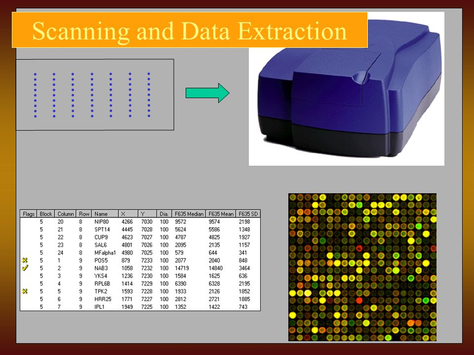 Scanning and Data Extraction