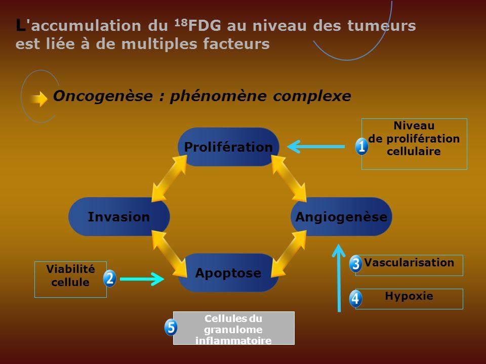 Niveau de prolifération Cellules du granulome inflammatoire