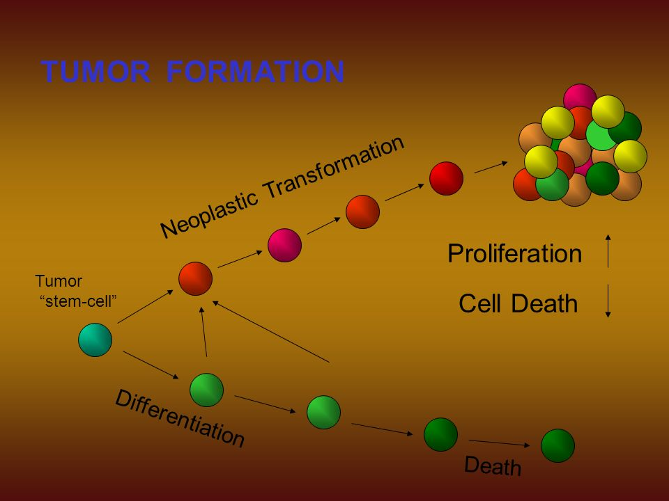 TUMOR FORMATION Proliferation Cell Death Neoplastic Transformation