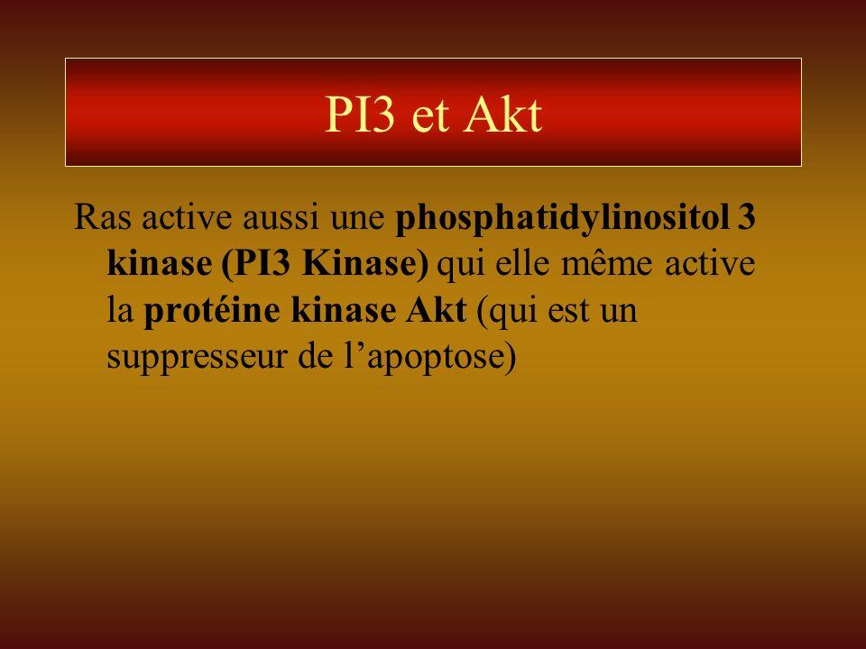PI3 et Akt