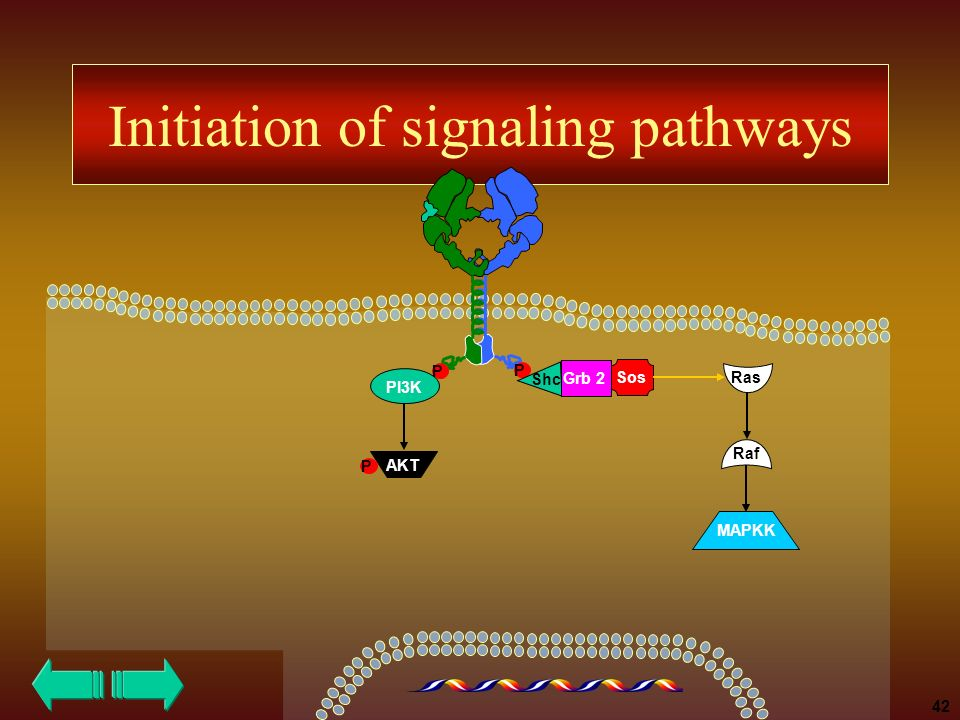 Initiation of signaling pathways