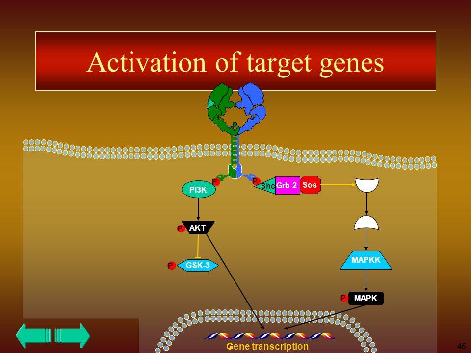 Activation of target genes
