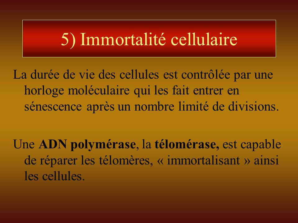 5) Immortalité cellulaire