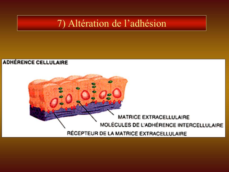 7) Altération de l'adhésion
