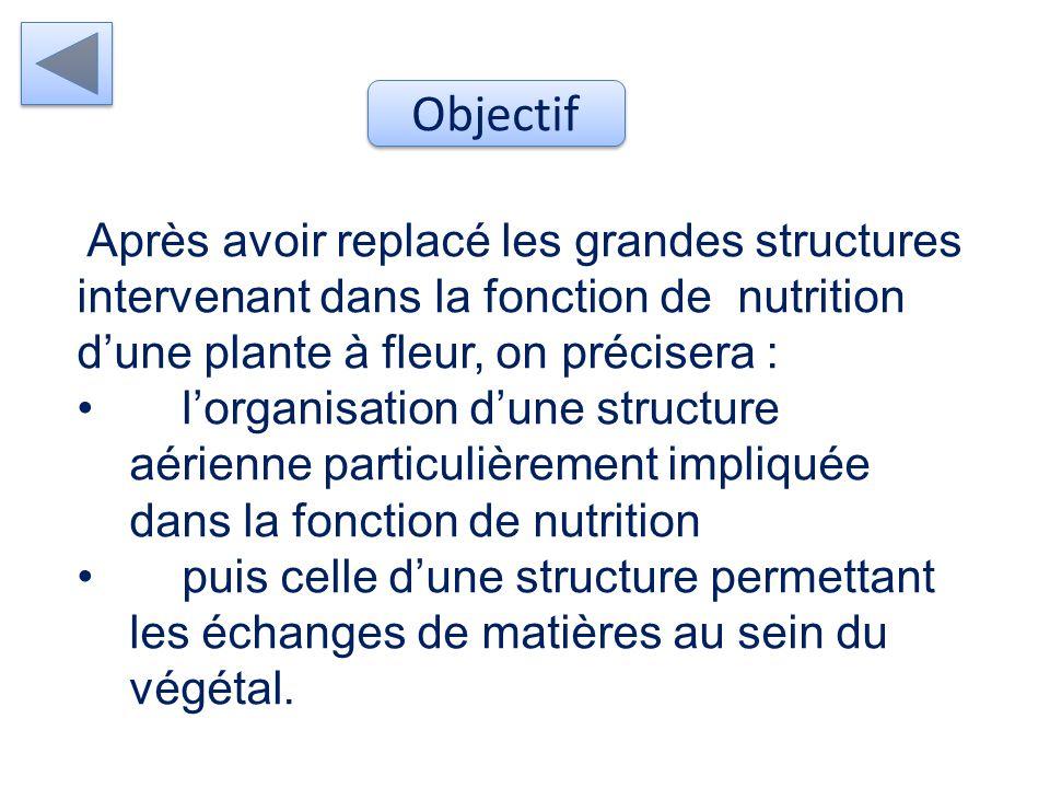 Objectif Après avoir replacé les grandes structures intervenant dans la fonction de nutrition d'une plante à fleur, on précisera :
