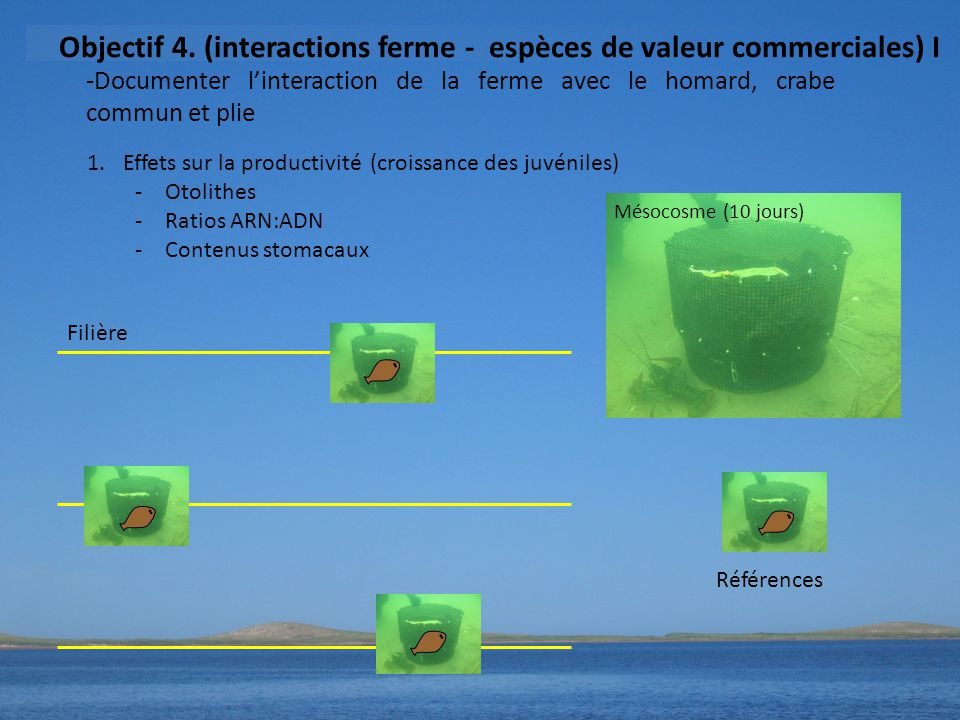 Objectif 4. (interactions ferme - espèces de valeur commerciales) I