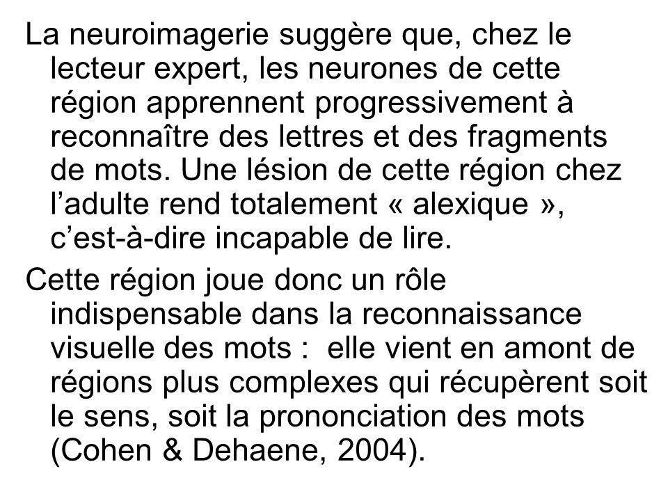 La neuroimagerie suggère que, chez le lecteur expert, les neurones de cette région apprennent progressivement à reconnaître des lettres et des fragments de mots. Une lésion de cette région chez l'adulte rend totalement « alexique », c'est-à-dire incapable de lire.