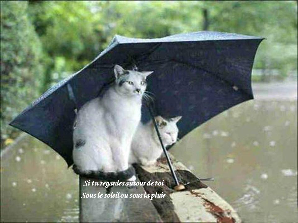 Si tu regardes autour de toi Sous le soleil ou sous la pluie