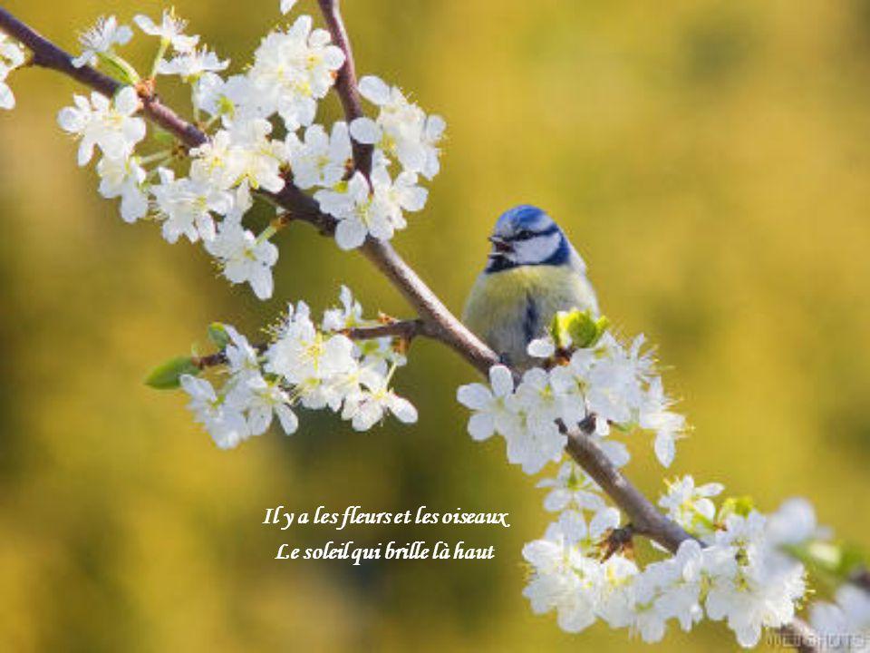 Il y a les fleurs et les oiseaux Le soleil qui brille là haut