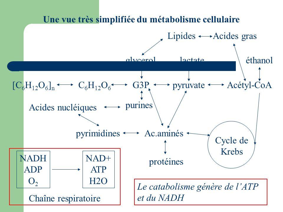 Une vue très simplifiée du métabolisme cellulaire