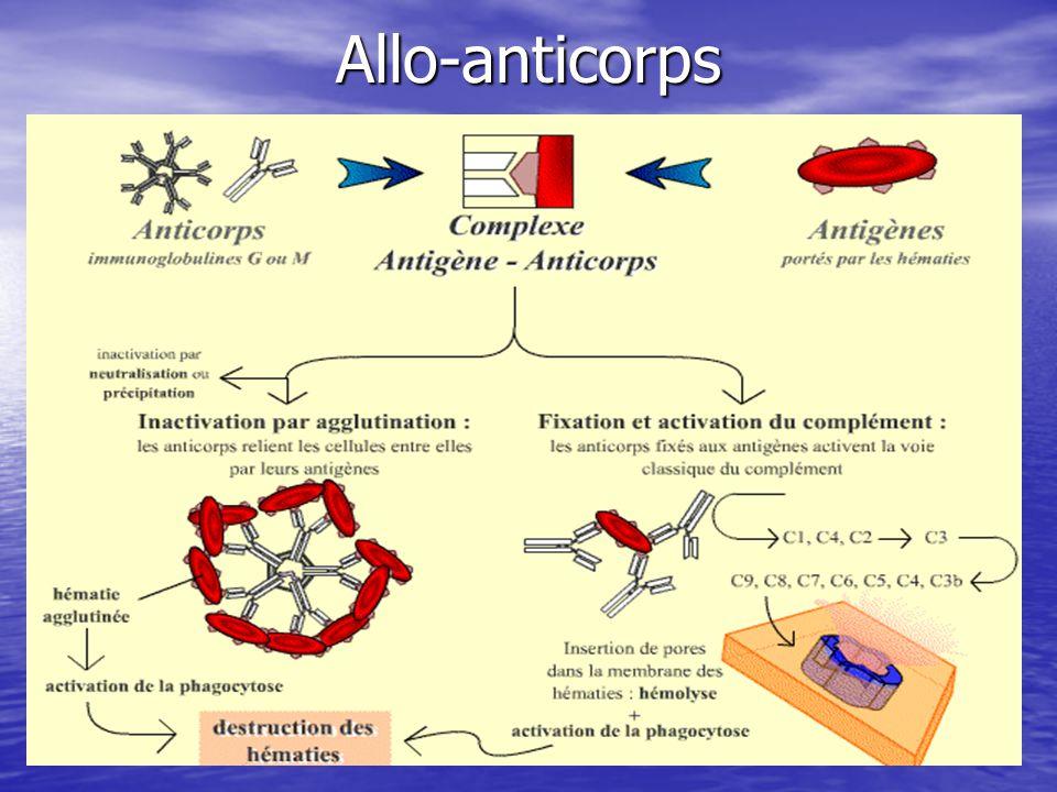 Allo-anticorps