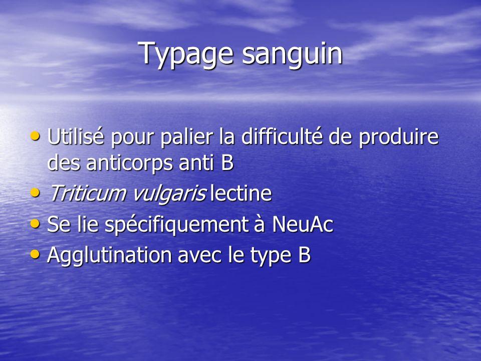 Typage sanguin Utilisé pour palier la difficulté de produire des anticorps anti B. Triticum vulgaris lectine.