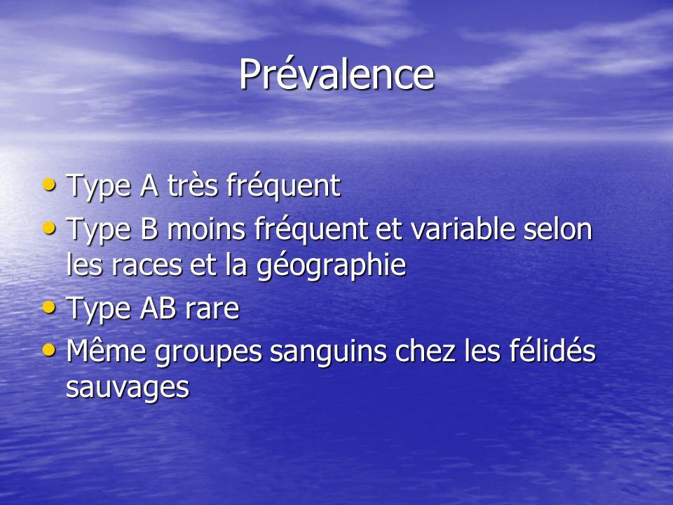 Prévalence Type A très fréquent