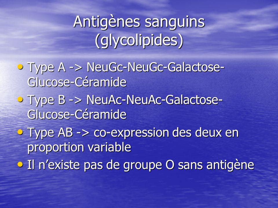Antigènes sanguins (glycolipides)