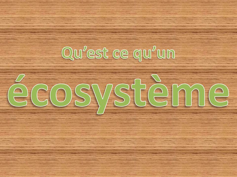 Qu'est ce qu'un écosystème