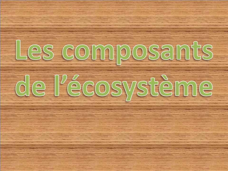 Les composants de l'écosystème