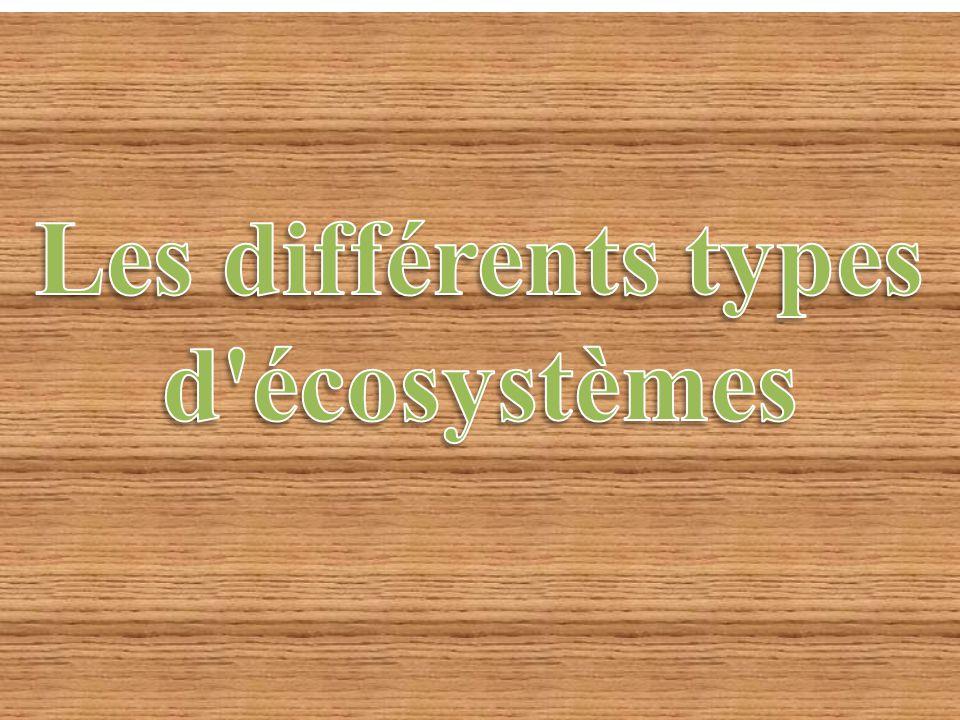 Les différents types d écosystèmes