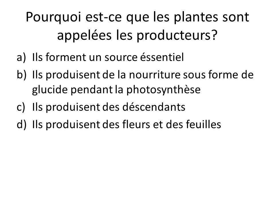Pourquoi est-ce que les plantes sont appelées les producteurs